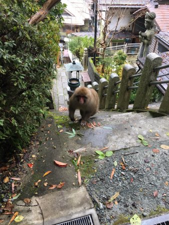 Senshinkan Matsuya: photo7.jpg