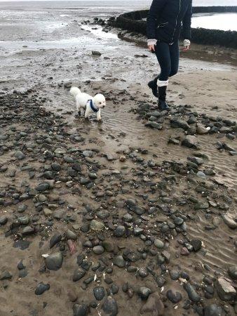 Powfoot, UK: dog walks on the beach