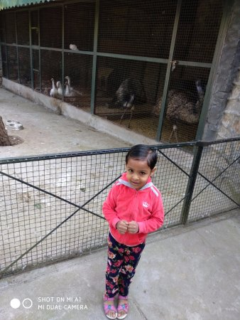 Pine Drive Resort: Small Zoo.