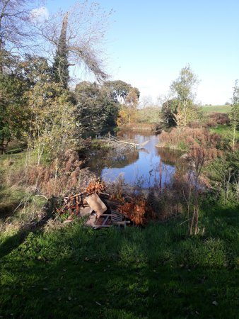 Limes Farm Shop and Tea Room: The duck pond...