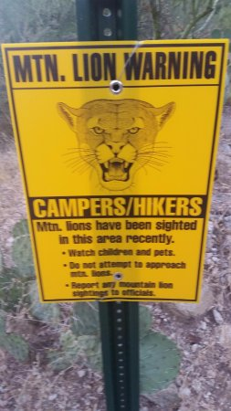Sabino Canyon: Warning Sign (it got my attention)