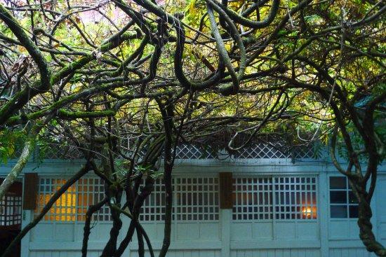 Ciyun Temple: 中庭藤花