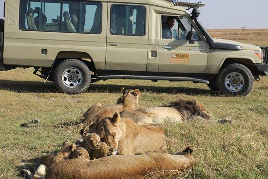Pumba Safaris Tanzania