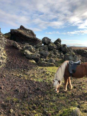 Viking Horses: Mid October Morning ride 2017