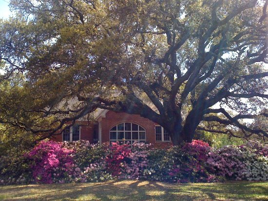 Southport, Carolina do Norte: One of our many beautiful live oak trees