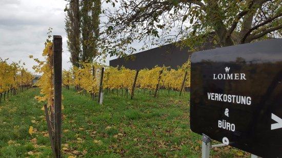 Langenlois, Austria: Beautiful fall day at Weingut Fred Loimer