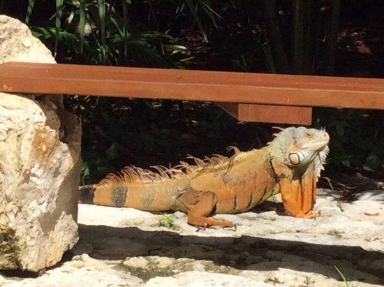 Mayan Palace Riviera Maya Updated 2017 Resort Reviews