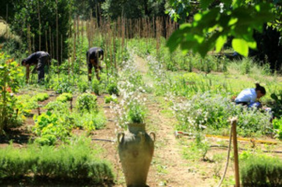 Cadenet, Frankrig: Le Potager en permaculture