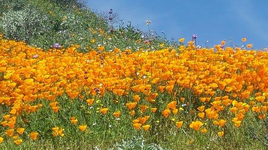 Hemet, Καλιφόρνια: photo5.jpg