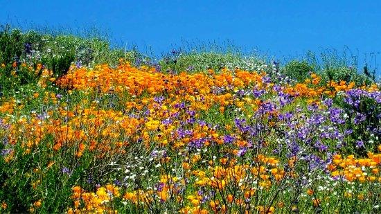 Hemet, Καλιφόρνια: photo8.jpg