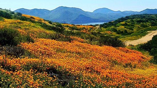 Hemet, Καλιφόρνια: photo9.jpg