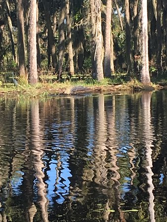 Central Florida Airboat Tours: photo2.jpg