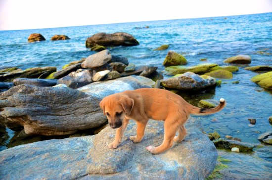 Nkhata Bay, Malaui: One of the dozen puppies that are the real MVPs of this hotel