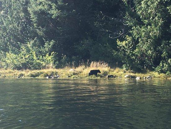 Majestic Ocean Kayaking: bear !!