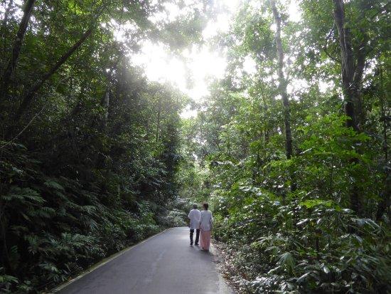 Кегалле, Шри-Ланка: Spaziergang durch den Regenwald