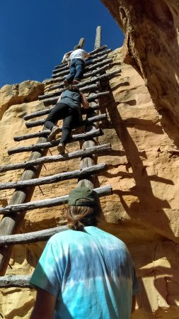 Towaoc, CO: this is the longest ladder taking up to a ruin...it is optional