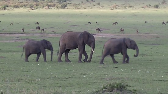 Pollman's Tours & Safaris: Elephants were the favorites!