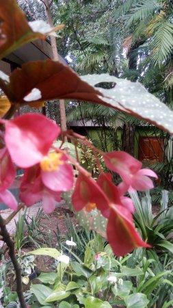 Hotel Jardines de Monteverde: Gardens