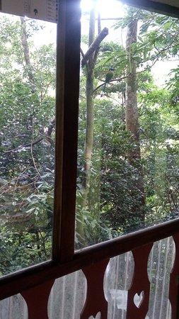 Hotel Jardines de Monteverde: Beautiful bird in front  of room terrace