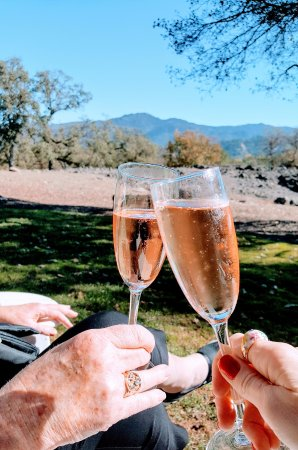 Napa Tour Shuttle : Cheers! From Maison Chandon