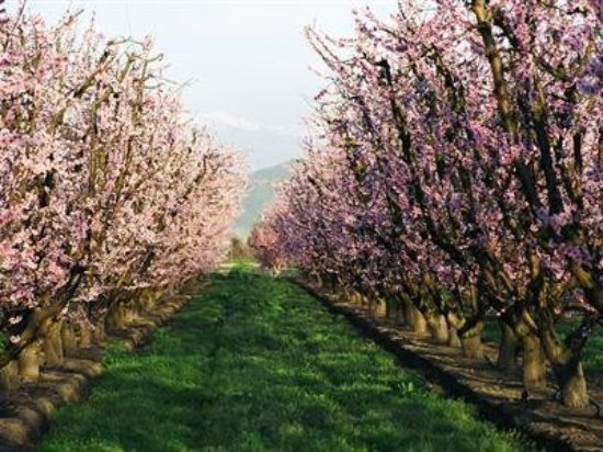 Reedley, Калифорния: Blossom Trail-Fruit Trail