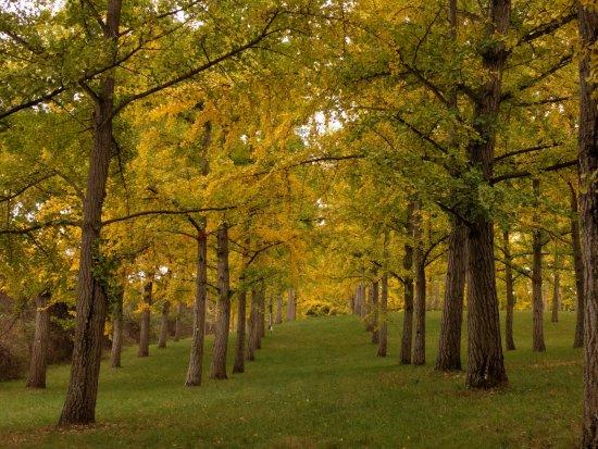 State Arboretum of Virginia
