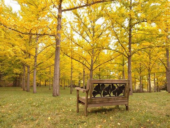 State Arboretum of Virginia: A view in solitude