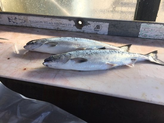 Goin Coastal Fishing Charters: Salmon...yummy!