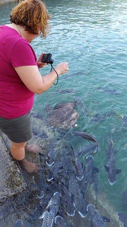 Aquascene: Some of the fish