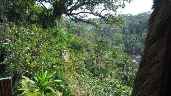 Kupu Kupu Barong Villas and Tree Spa: IMG-20171030-WA0014_large.jpg