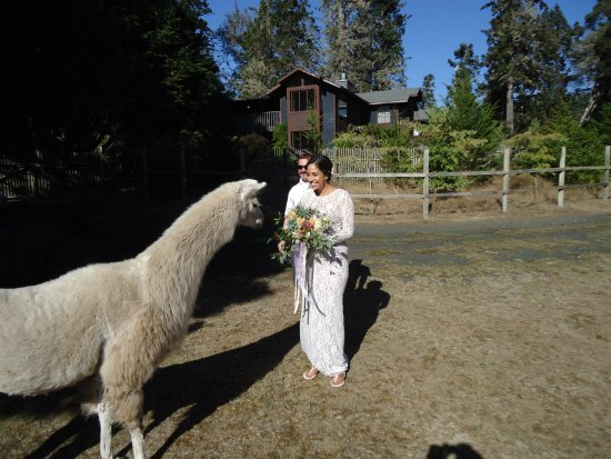 Little River, CA: Meeting the llamas