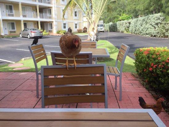 Sunshine Suites Resort: photo0.jpg