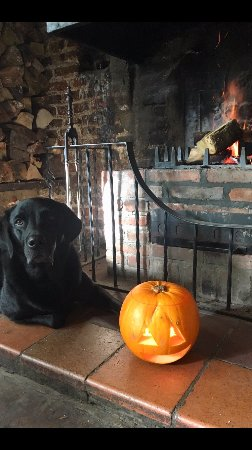 Betchworth, UK: Pub dog