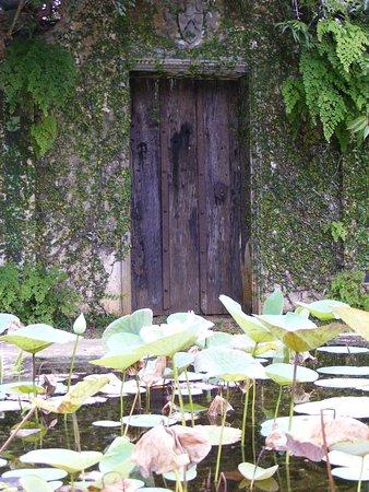 Brief Garden - Bevis Bawa: backyard