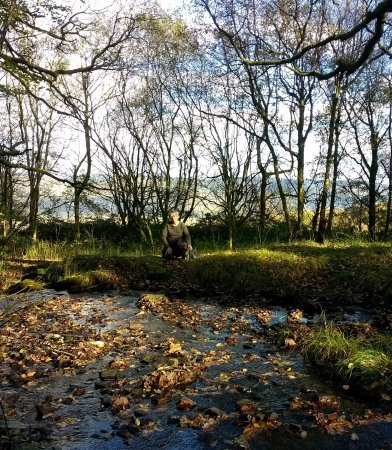 Aberdare, UK: Our favourite sunny glade.