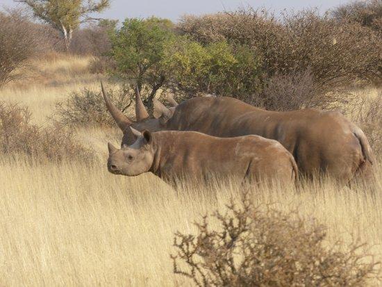 Tswalu Kalahari Game Reserve, Republika Południowej Afryki: Mother and young