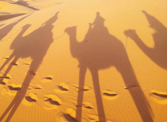 Camel Trekking - Day Tours: IMG_20171025_192835_310_large.jpg
