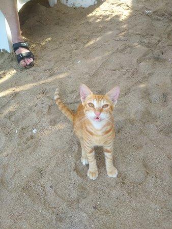 Emirate of Fujairah, Vereinigte Arabische Emirate: Мой милый рыжий кот