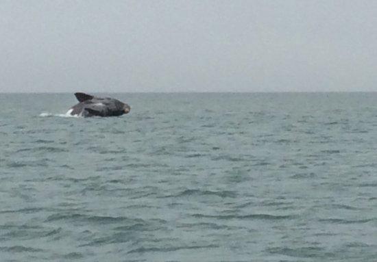 Zeepaard Boat Tours: photo0.jpg