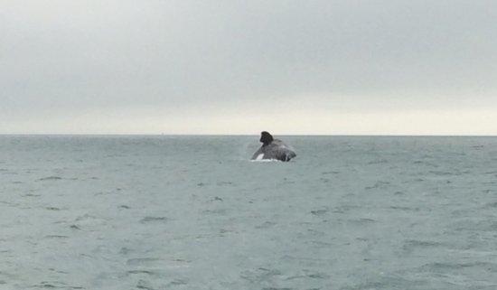 Zeepaard Boat Tours: photo1.jpg