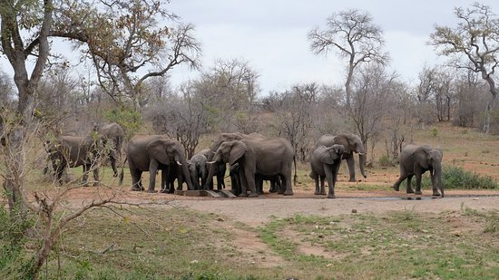 Senalala Luxury Safari Camp: View of elephants at watering hole in front of hotel