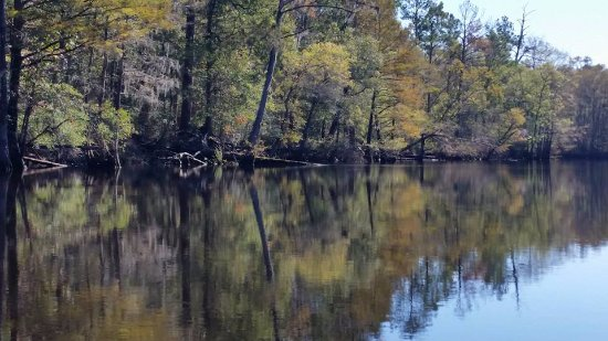 Conway, SC: Amazing natural scenery