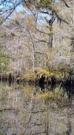 Conway, Южная Каролина: So serene...hidden area off main river
