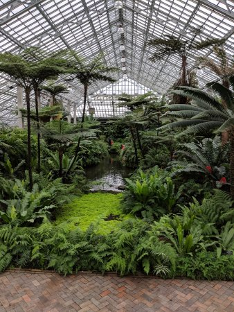 Garfield Park Conservatory: Fern room