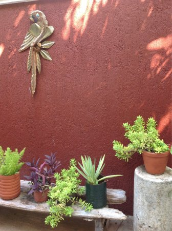 Casa Tia Micha: photo3.jpg