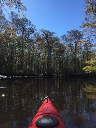 McClellanville, SC: Paddling upstream on Wambaw Creek. The livin' is easy...