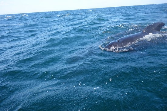 Bay St. Lawrence, Canada: pilot whale up close