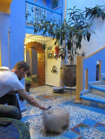 Hotel Dar Terrae: Bottom level and Hannah's CUTE dog, Joy!