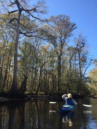 McClellanville, SC: Paddling up the Wambaw. The living is easy...