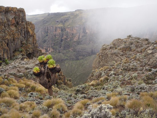Mount Kenya National Park, เคนยา: Day 4